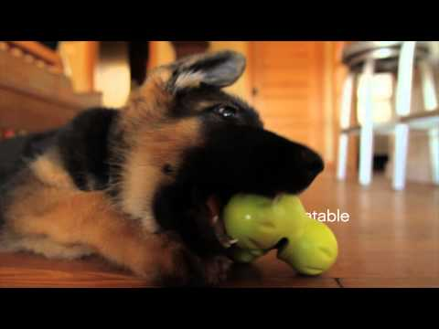 Tux - Durable Treat Toy For Dogs