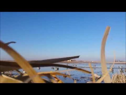 Self Guided Duck Hunt In Southeast Missouri-Prairie Hunting Adventures