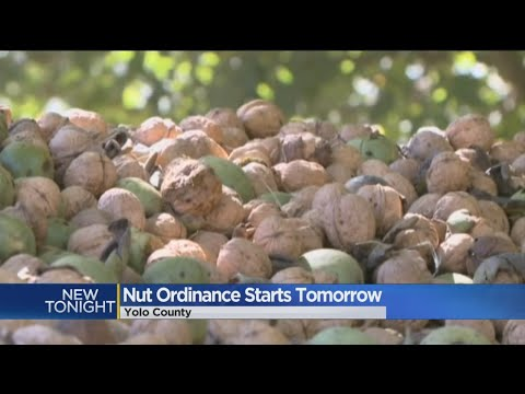 Three Years Later, Yolo County Ordinance Has Farmers Saying Nuts To Thieves
