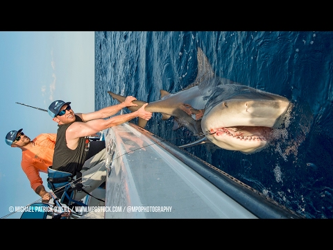 Shark Fishing with New York Mets Pitchers Steven Matz & Sean Gilmartin