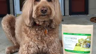 A Dog ( Who loves treats) Promoting CBD oil Pet Products