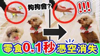 【整蠱】🐶狗狗看見零食「0.1秒憑空消失」!?會飛的肉條?MUFFIN、BROWNIE反應超爆笑😂(中字)