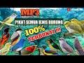 Suara Pikat Semua Jenis Burung Sudah Terbukti  Mp3 - Mp4 Download