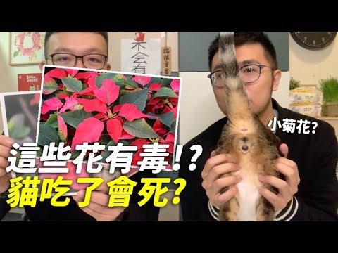 【這些花有毒!?貓吃了會死?】志銘與狸貓