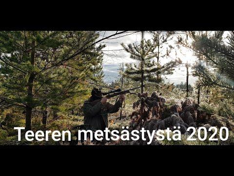 Teeren Metsästystä 2020 Osa1|Kanalinnustus|Black Grouse Hunting