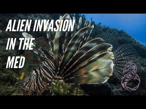 how-invasive-species-spread-in-the-mediterranean-sea---marine-science-documentary