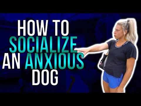 HOW TO SOCIALIZE AN ANXIOUS DOG