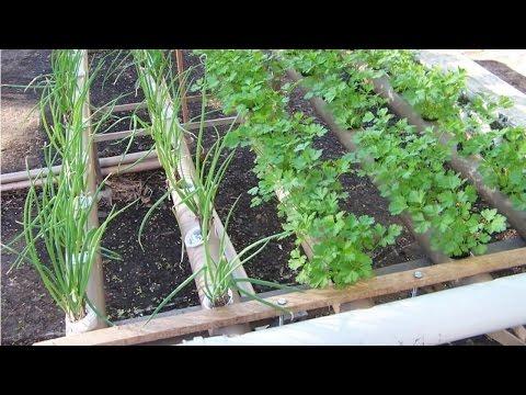 Curso Hidroponia de Plantas Medicinais e Condimentares - Espécies