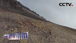 [中国新闻] 新疆:30多只北山羊现身天山山脉 | CCTV中文国际