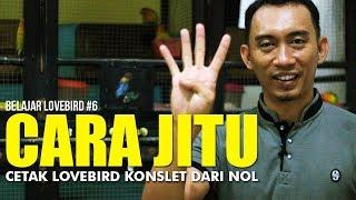 Download lagu BELAJAR LOVEBIRD #6: Cara Jitu Cetak Lovebird Konslet Dari Nol