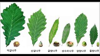 42. 도토리나무 6형제 이름 유래