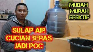 Download lagu Cara Sederhana Olah Limbah Air Cucian Beras Jadi POC