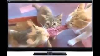 Funny cats)) Смешные и веселые котята)) Классые киски) Ржач, прикольное, смотреть)