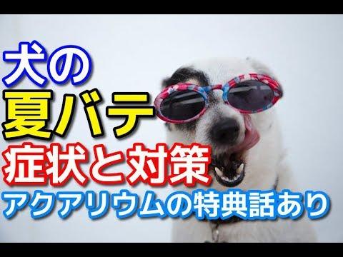 夏バテ 犬 症状