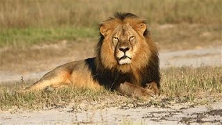 Four Things to Know About Cecil the Lion