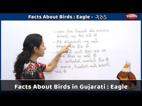 Видео Essay about eagle bird