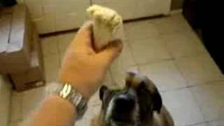 Dog Eats Bean Burrito In 1 Second