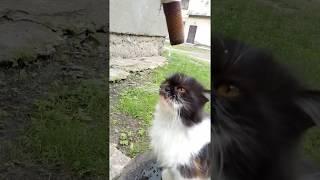 Кошка пьет воду из крана во дворе
