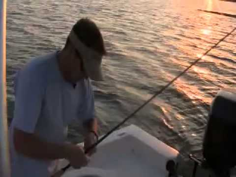 Reel Outdoor Adventures - Emerson Point Trout and Shark
