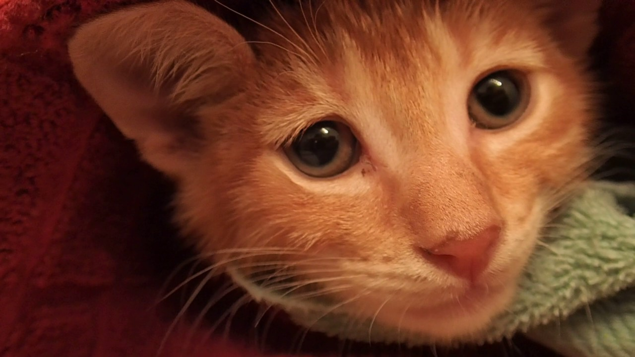 cat stevens happy day