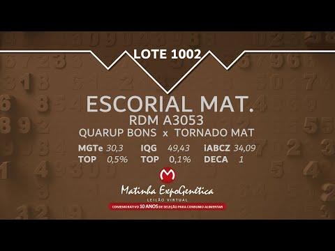 LOTE 1002 MATINHA EXPOGENÉTICA 2021