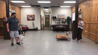 How to properly manage dog reactivity- How to stop dog reactivity on the leash!