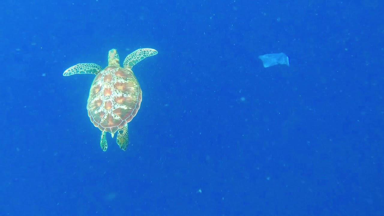 驚!海龜吃塑膠袋