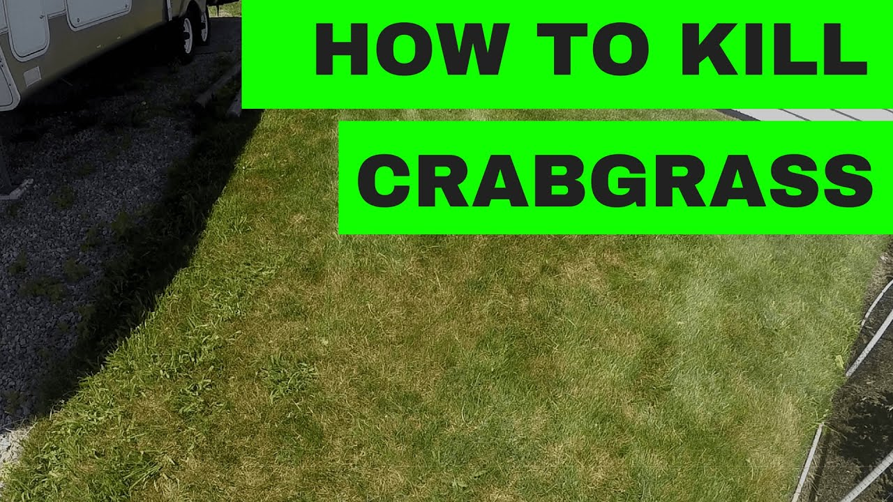 How To Kill Crabgrass In Your Lawn Youtube