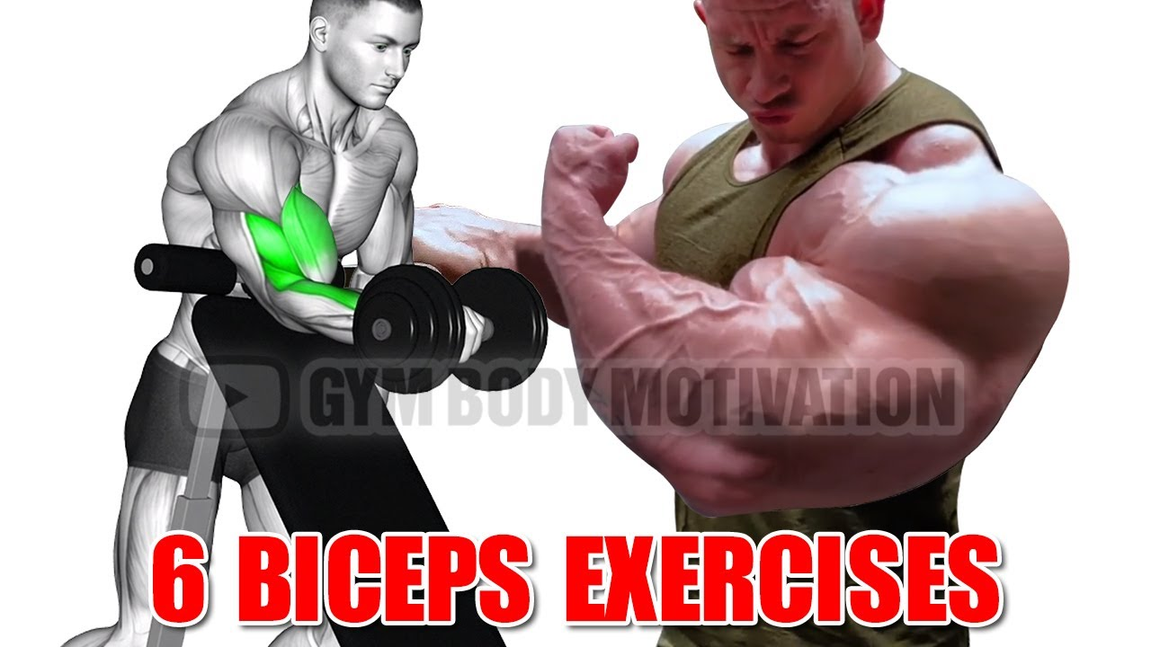 6 Bicep Exercises for Bigger Arms - Gym Body Motivation