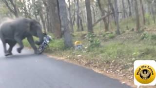 Wild Elephant chasing 2 wheeler
