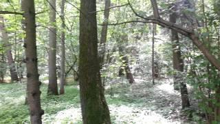 Lasy w Skorzęcinie