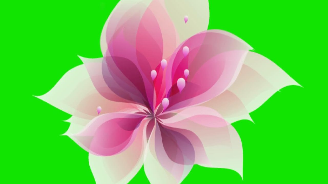 Animated Flower Blooming Green Screen