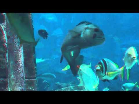 In 3D  11Millionen Liter Aquarium Hotel Antlantis Palm Jumeirah
