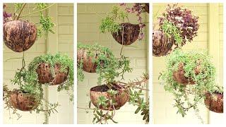 Ideia Incrível Para Pendurar Plantas Usando Casca de Coco