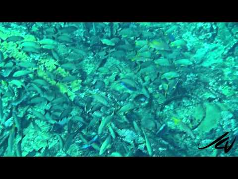 Snorkeling Banco Chinchorro Mexico   YouTube HD