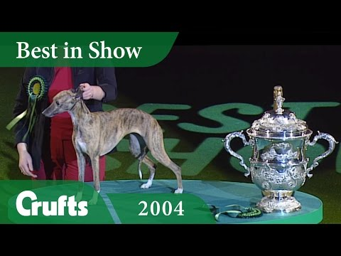 Whippet wins Best in Show at Crufts 2004 | Crufts Classics