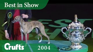 Whippet wins Best in Show at Crufts 2004 | Crufts Dog Show