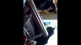 Gadające Koty / Talking Cats