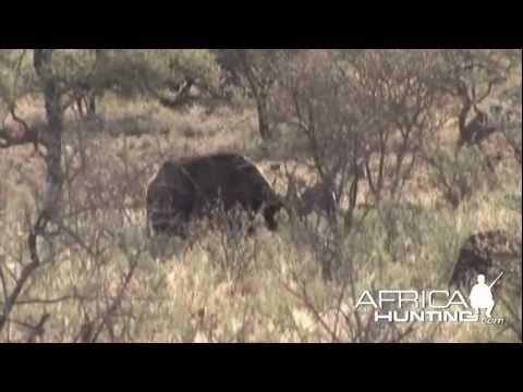 Flintlock Muzzleloader Deer Hunting 2011 Big Buck Pennsylvania #2 from YouTube · Duration:  8 minutes 22 seconds