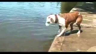El perro mas tonto del mundo