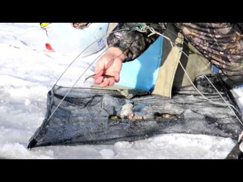 тем, как сохранить малька для рыбалки вклады