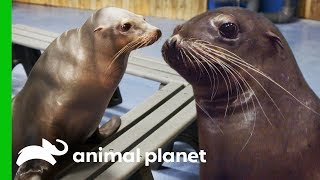 A Day of Seals and Sea Lions |…