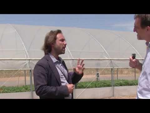 Organic in greenhouses