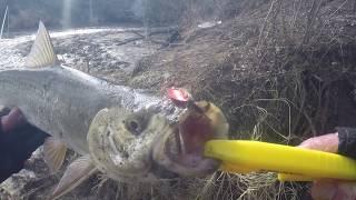 Хитрый ЖЕРЕХ спрятался или ветром сдуло Москва река ловля на спиннинг Рыбалка в МАРТЕ
