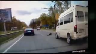 Водитель сбил собаку