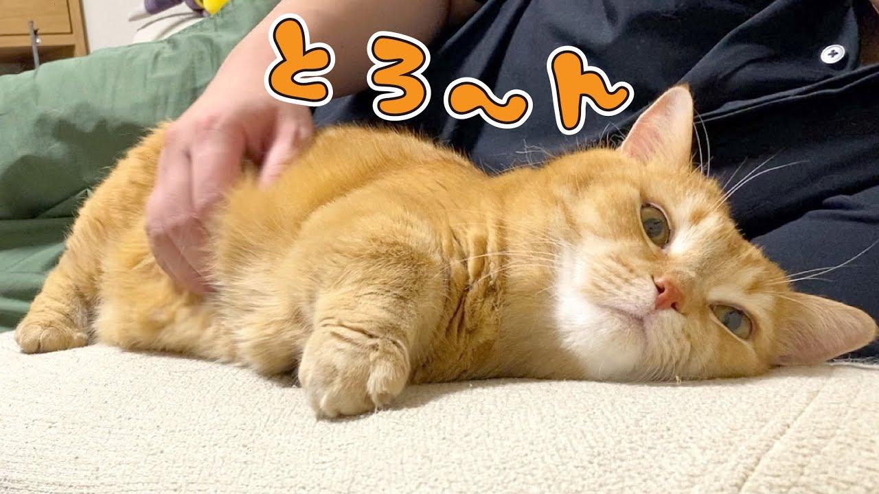パパのゴッドハンドに踊らされてモチモチになっちゃった短足猫が可愛い!