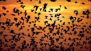 Motta & MJT - Birds Of Soul