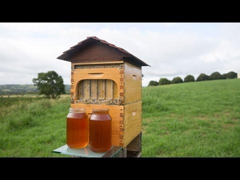 Flow™ Hive Full Reveal [Original crowdfunding video 2015]