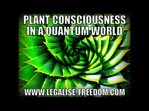 Bonny Casel - Plant Consciousness in a Quantum World