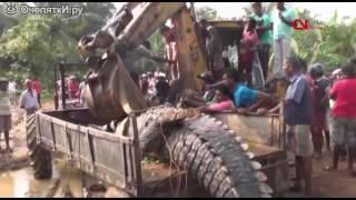 видео На Филиппинах поймали крокодила гиганта